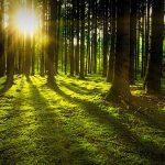 Wald Holz