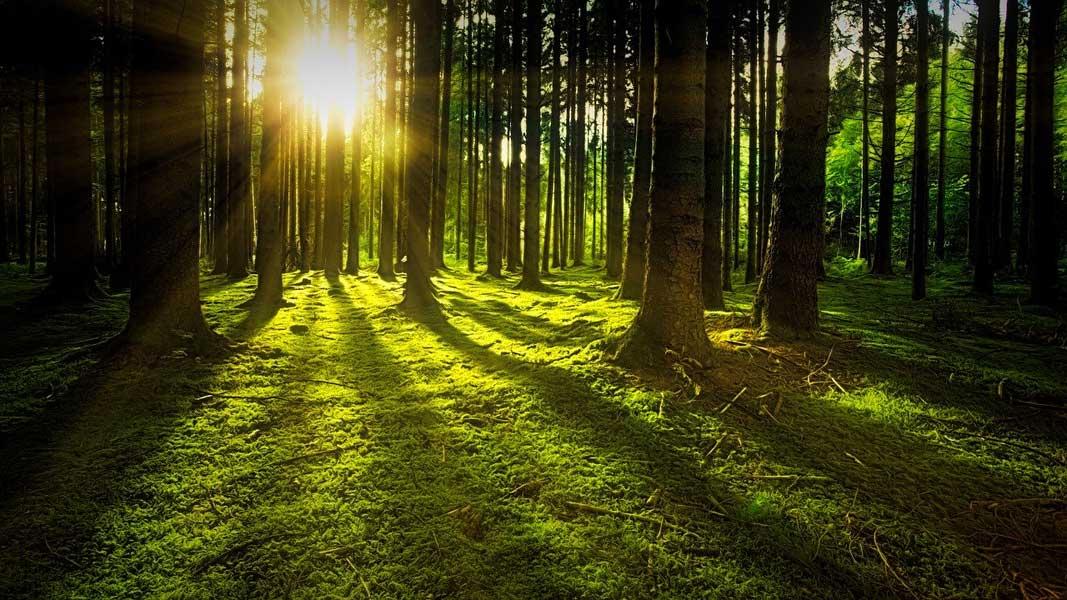 Holz -ein unverzichtbarer Bestandteil im klimaneutralen Energiemix-